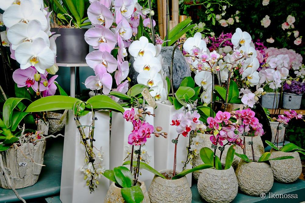 des orchidées