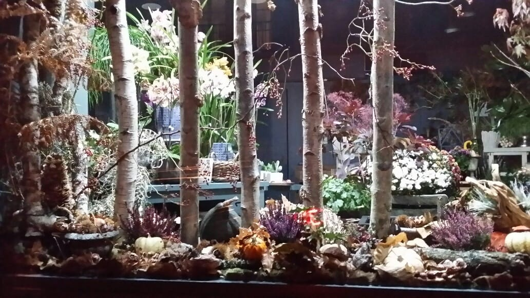 Decoration Vitrine Theme Automne : Ambiance vitrine automne fleuriste rambouillet vila cyrus